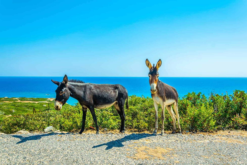 Best places to live in North Cyprus - Karpaz National Park, North Cyprus