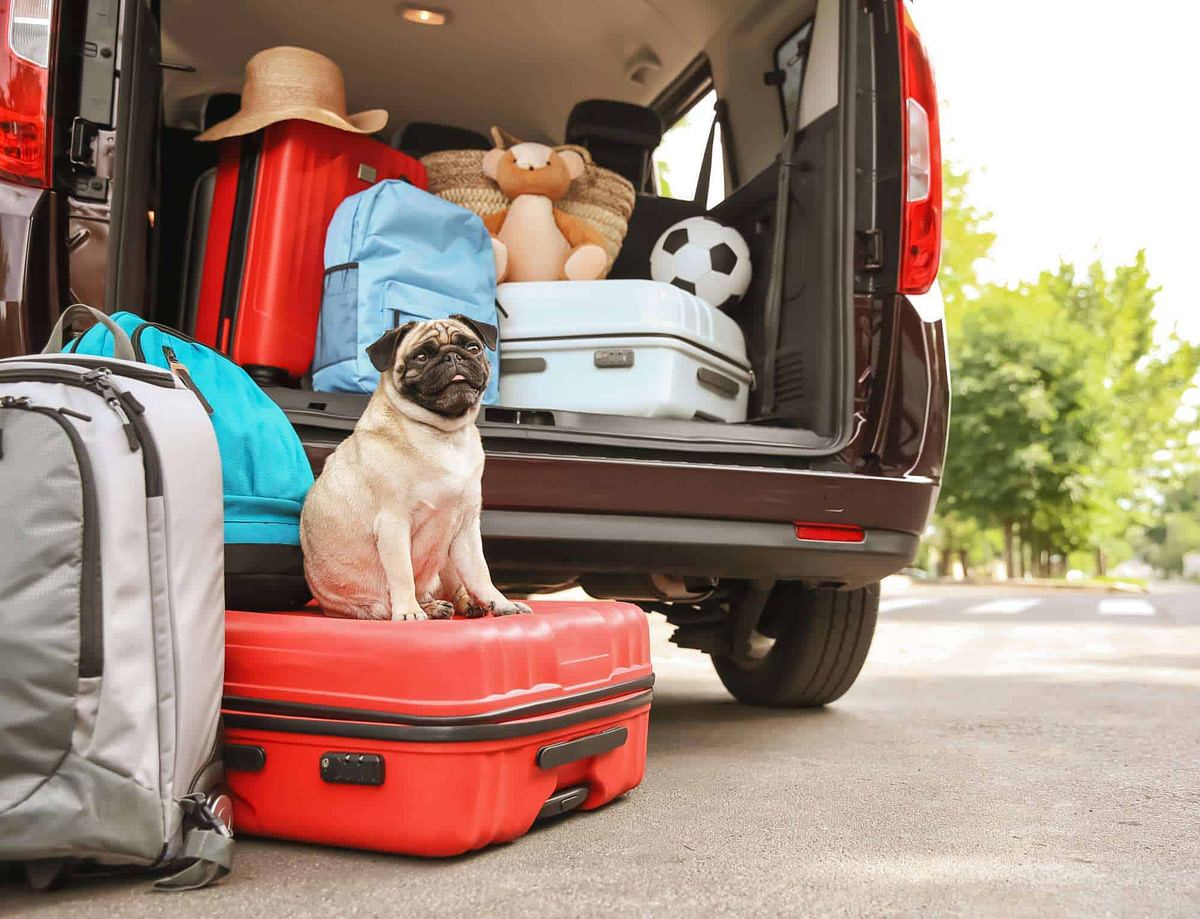 Car boot with cute pug and luggage - ready to move to Spain
