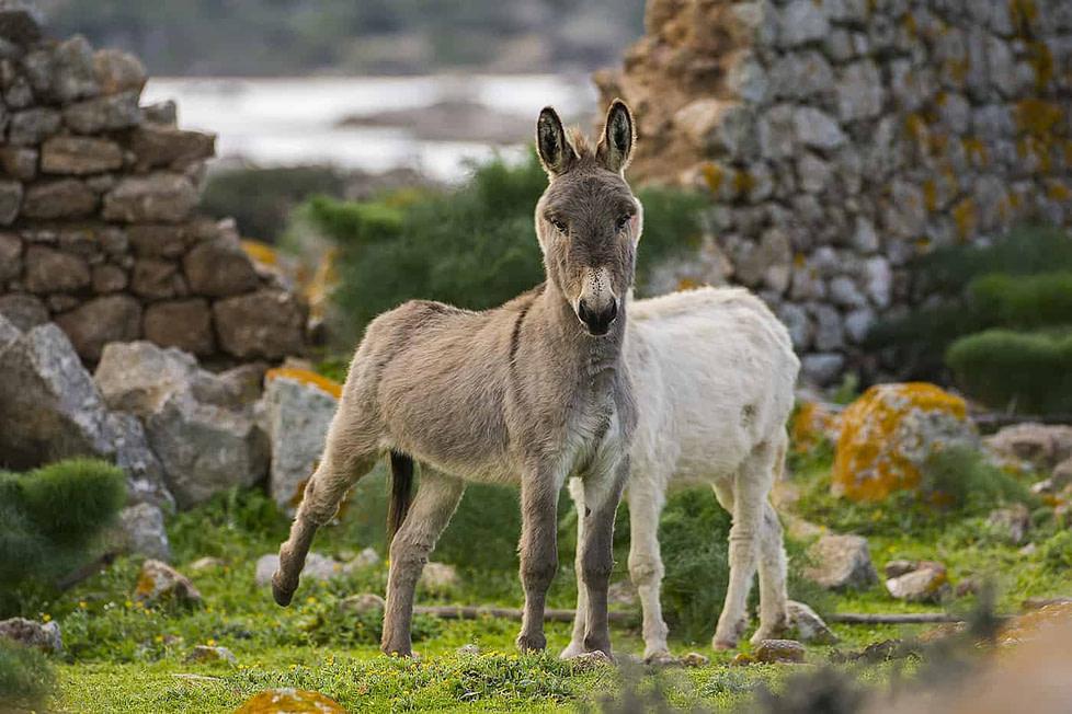 Sardinia boasts great weather all year round