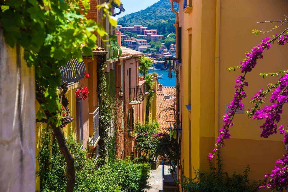 A narrow street in Collioure, France, full of bloom and trees, leading down to a harbour.